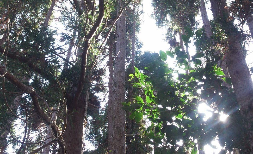 病み人は森へ行こう 気力を養う森の贅沢