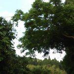 体を健康にする森の治癒力 病み人は森へ行こう
