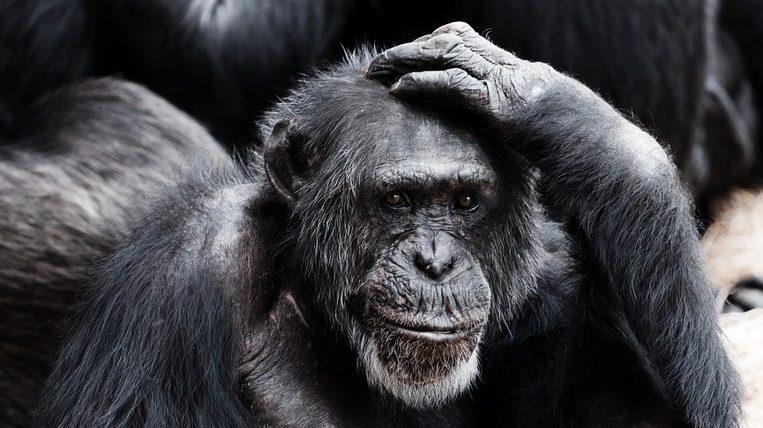 言葉の繰り返しをやめてはいけない理由と脳の働き